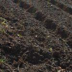 I primi lavori nell'orto: preparare la terra