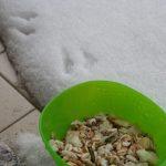 Sotto la neve… dar da mangiare agli uccellini