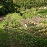 Dal balcone alla terra: ecco il nostro orto di quest'anno!