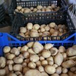 Poche patate